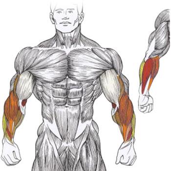 Почему болят мышцы спины - причины и лечение мышечной боли
